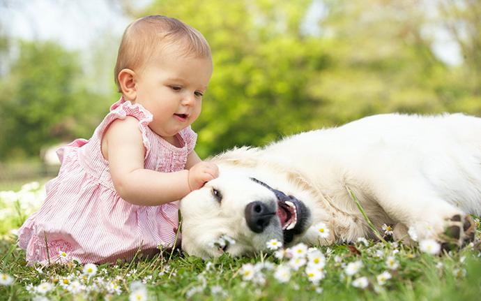宝宝和宠物